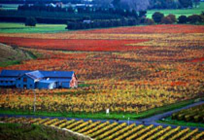 Hawke's Bay Vignoble