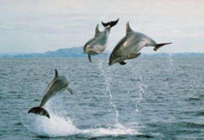 Northland - Bay of Islands dolphins